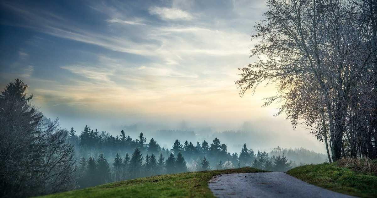 dimma skog